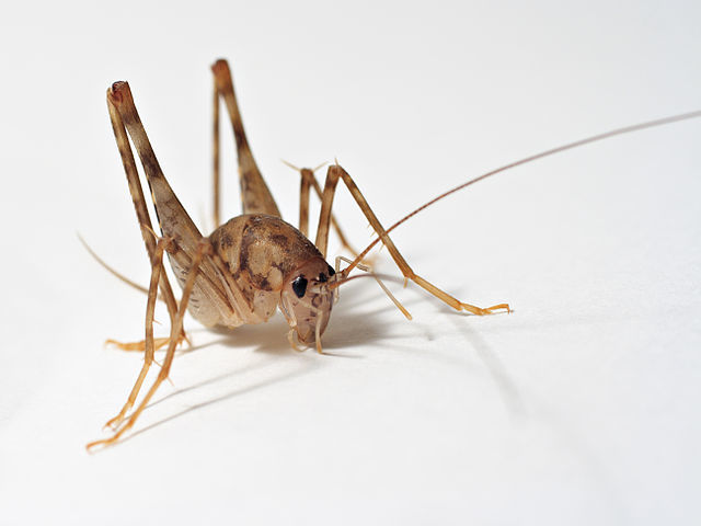 6 Bugs You Didn't Know Existed | Breda Pest Management